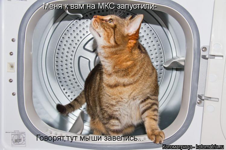 Котоматрица: Меня к вам на МКС запустили- Говорят,тут мыши завелись...