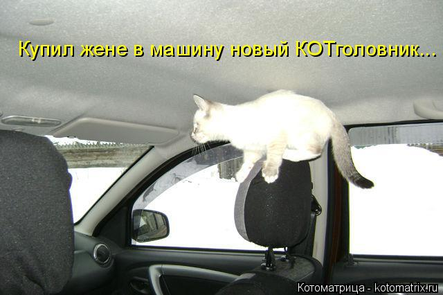 Котоматрица: Купил жене в машину новый КОТголовник...