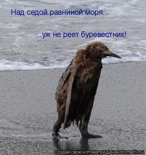 Котоматрица: Над седой равниной моря...  ...уж не реет буревестник!