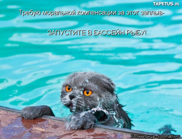 Котоматрица: Требую моральной компенсации за этот заплыв- ЗАПУСТИТЕ В БАССЕЙН РЫБУ!
