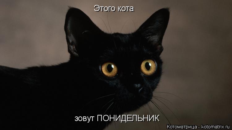 Котоматрица: Этого кота  зовут ПОНИДЕЛЬНИК