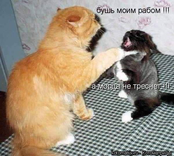 Котоматрица: бушь моим рабом !!! а морда не треснет !!!