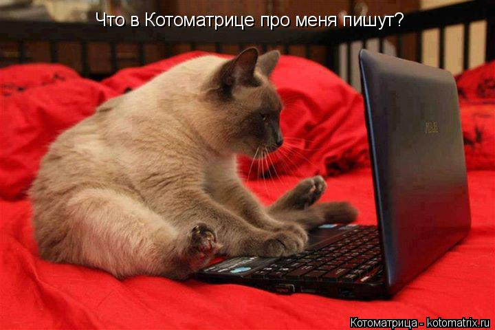 Котоматрица: Что в Котоматрице про меня пишут?
