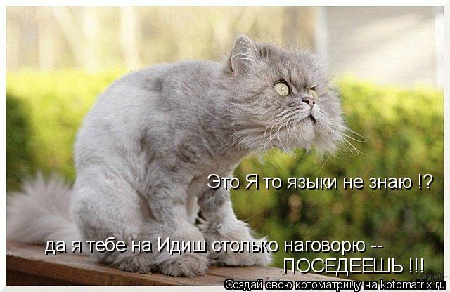 Котоматрица: Это Я то языки не знаю !? да я тебе на Идиш столько наговорю -- ПОСЕДЕЕШЬ !!!