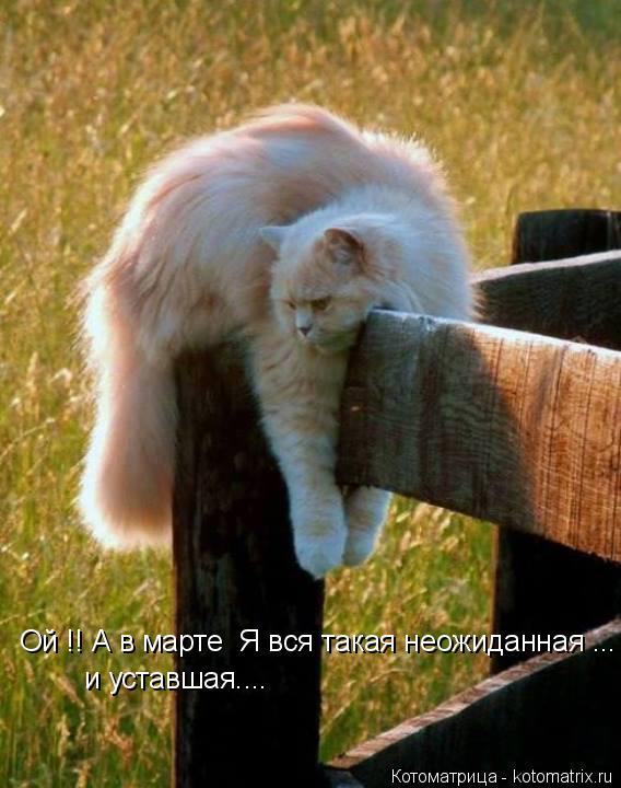 Котоматрица: Ой !! А в марте  Я вся такая неожиданная ... и уставшая....