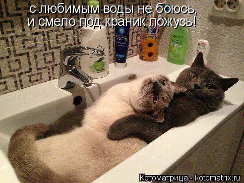 Котоматрица: с любимым воды не боюсь, и смело под краник ложусь!