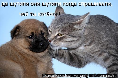 Котоматрица: да шутили они,шутили,когда спрашивали, чей ты котёнок!