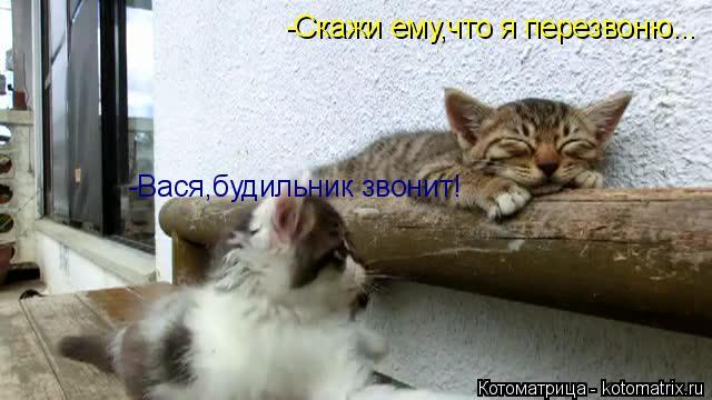 Котоматрица: -Скажи ему,что я перезвоню... -Вася,будильник звонит!