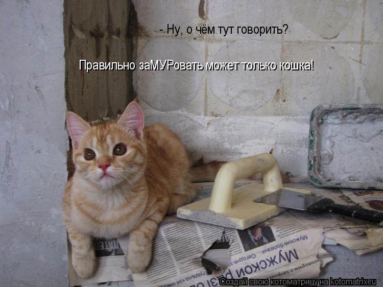 Котоматрица: - Ну, о чём тут говорить? Правильно заМУРовать может только кошка!