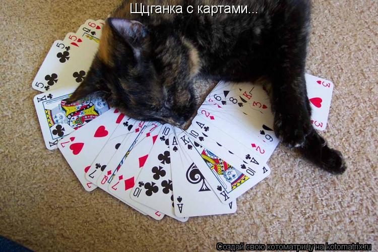 Котоматрица: Щцганка с картами...