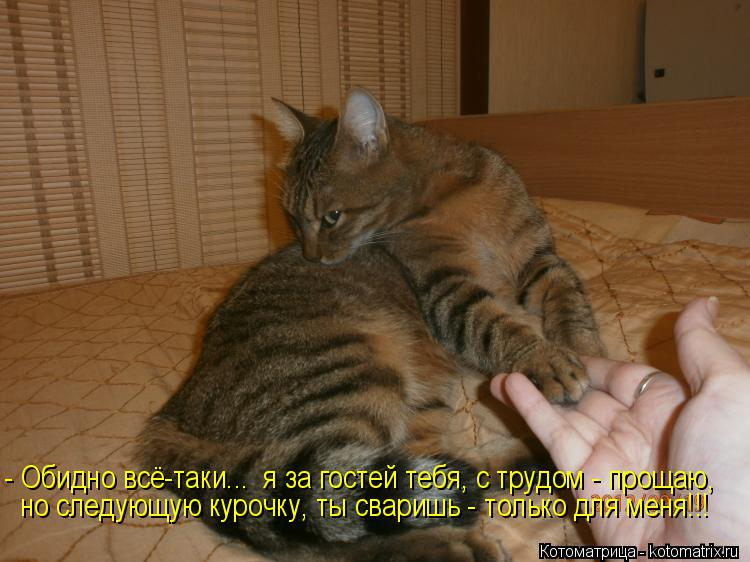 Котоматрица: - Обидно всё-таки...  я за гостей тебя, с трудом - прощаю, но следующую курочку, ты сваришь - только для меня!!!