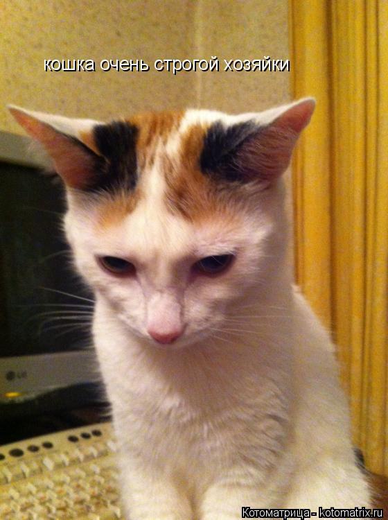 Котоматрица: кошка очень строгой хозяйки