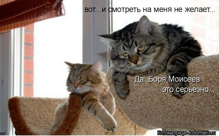 Котоматрица: Да..Боря Моисеев это серьезно... вот...и смотреть на меня не желает...