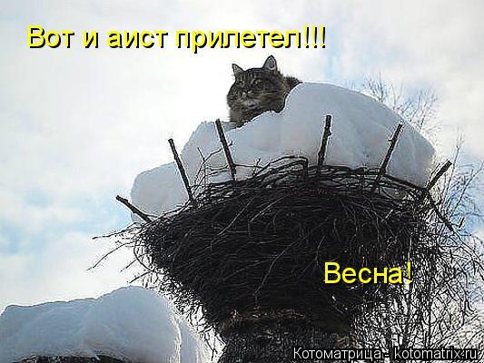Котоматрица: Вот и аист прилетел!!! Весна!