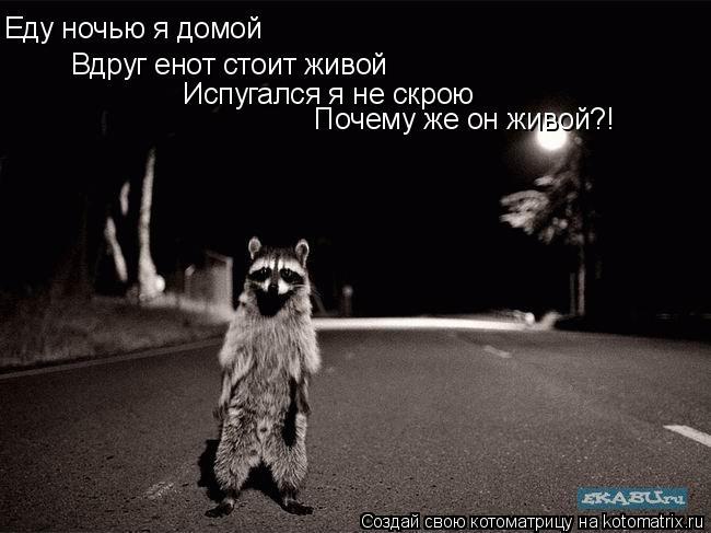 Котоматрица: Еду ночью я домой Вдруг енот стоит живой Испугался я не скрою Почему же он живой?!