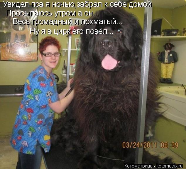 Котоматрица: Увидел пса я ночью,забрал к себе домой Просыпаюсь утром а он... Увидел пса я ночью,забрал к себе домой Весь громадный и лохматый... Ну я в цирк