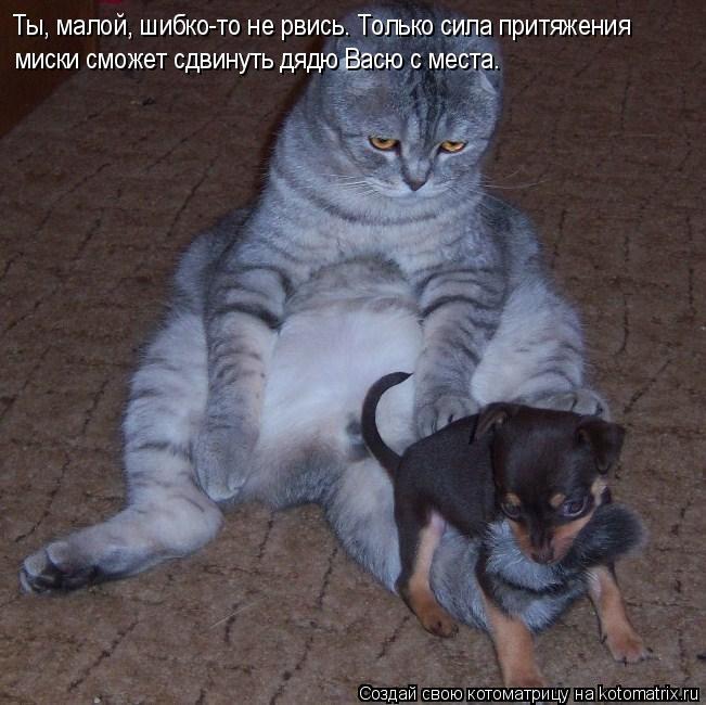 Котоматрица: Ты, малой, шибко-то не рвись. Только сила притяжения миски сможет сдвинуть дядю Васю с места.