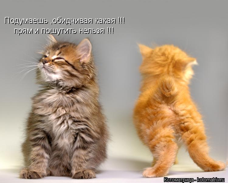 Котоматрица: Подумаешь ,обидчивая какая !!! прям и пошутить нельзя !!!
