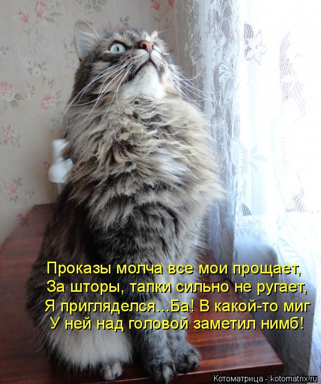 Котоматрица: Проказы молча все мои прощает, За шторы, тапки сильно не ругает, Я пригляделся...Ба! В какой-то миг У ней над головой заметил нимб!