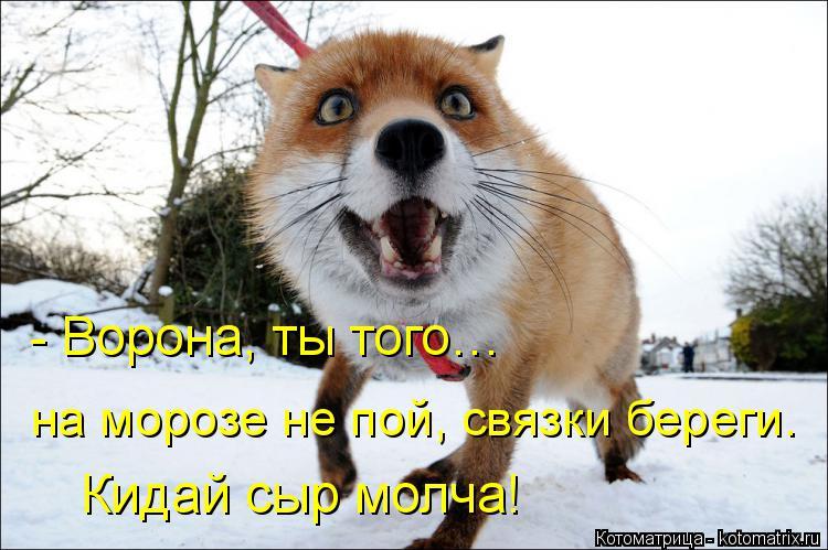 Котоматрица: - Ворона, ты того… на морозе не пой, связки береги.  Кидай сыр молча!