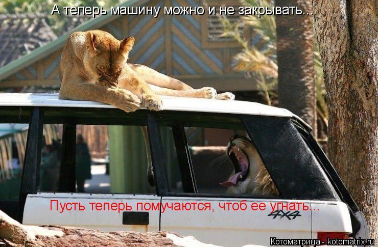 Котоматрица: А теперь машину можно и не закрывать... Пусть теперь помучаются, чтоб ее угнать...