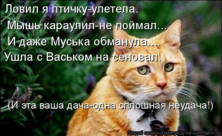 почему кошки лучше ловят мышей чем коты