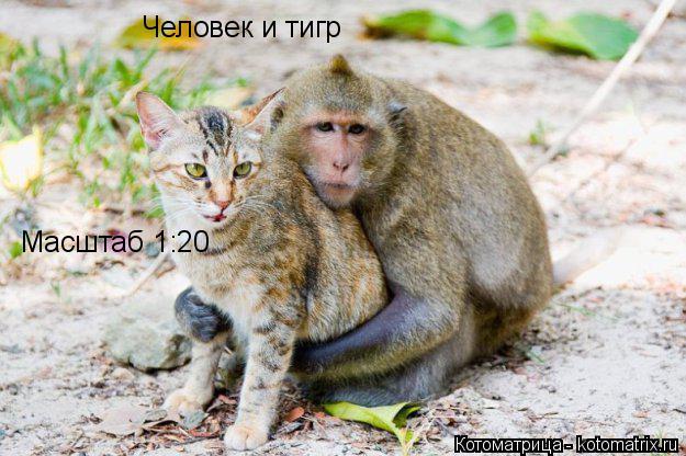 Котоматрица: Человек и тигр Масштаб 1:20
