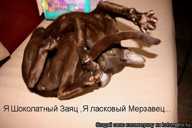 Котоматрица: Я Шоколатный Заяц ,Я ласковый Мерзавец...