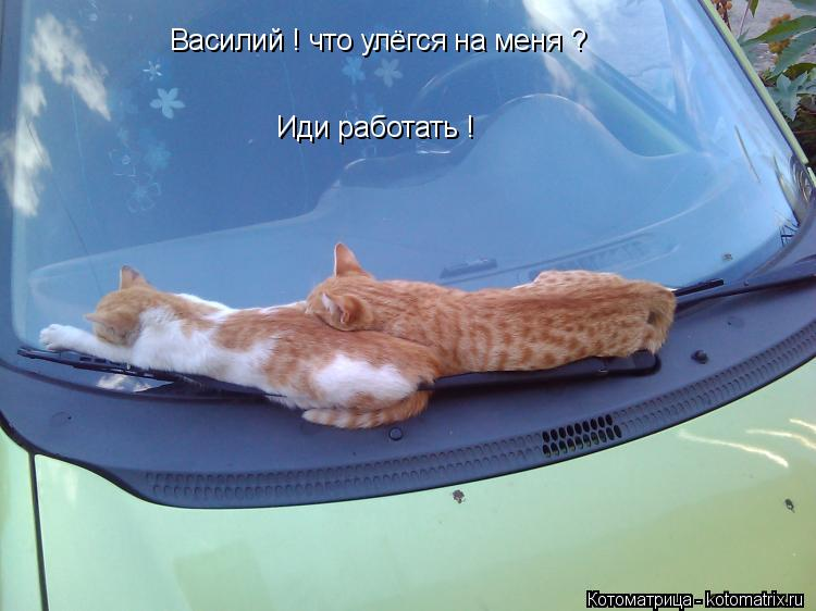 Котоматрица: Василий ! что улёгся на меня ? Иди работать !