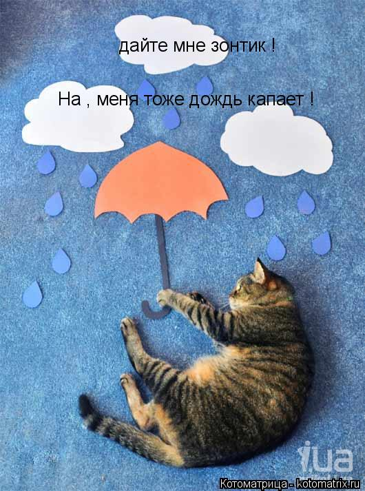Котоматрица: дайте мне зонтик ! На , меня тоже дождь капает !