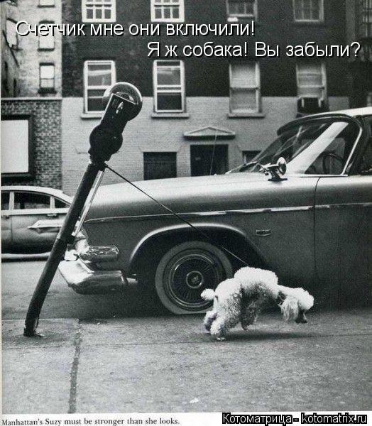 Котоматрица: Счетчик мне они включили! Я ж собака! Вы забыли?