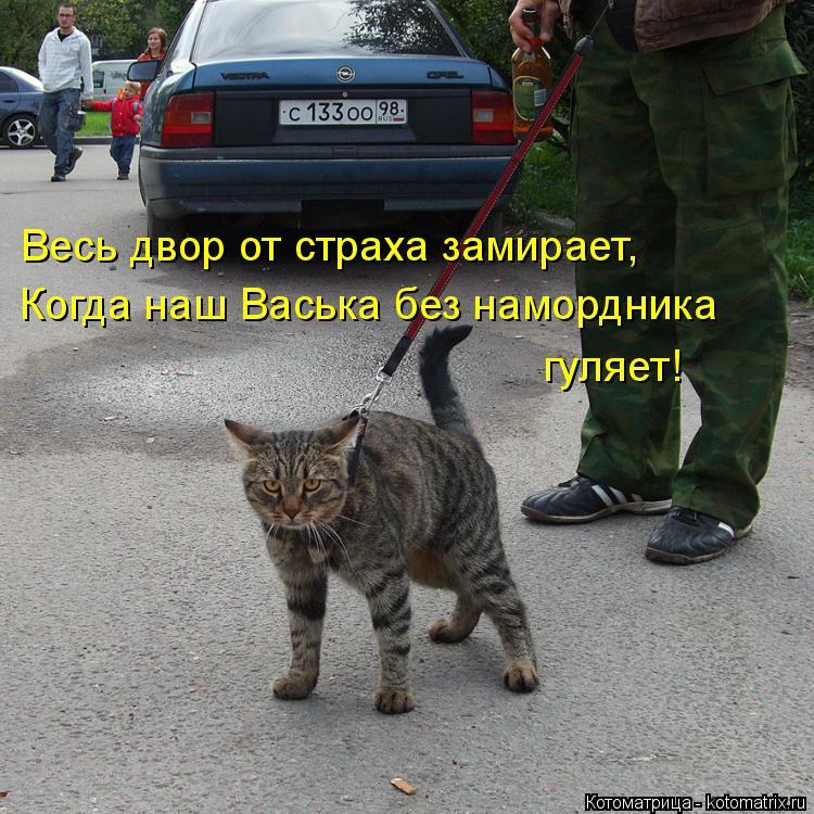 Котоматрица: Весь двор от страха замирает, Когда наш Васька без намордника  гуляет!