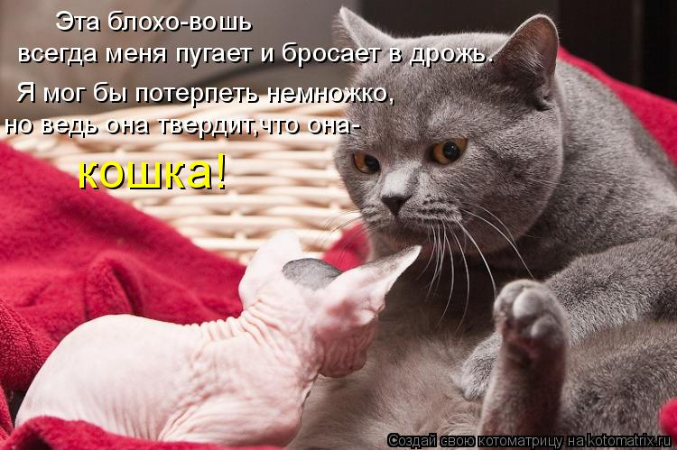 Котоматрица: Эта блохо-вошь всегда меня пугает и бросает в дрожь. Я мог бы потерпеть немножко, но ведь она твердит,что она- кошка!