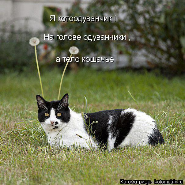 Котоматрица: Я котоодуванчик ! На голове одуванчики , а тело кошачье