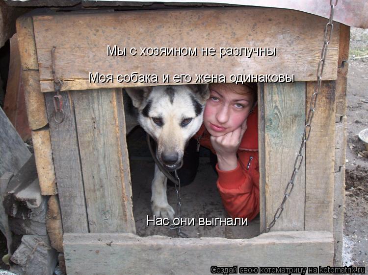 Котоматрица: Мы с хозяином не разлучны  Моя собака и его жена одинаковы  Нас они выгнали