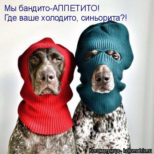 Котоматрица: Мы бандито-АППЕТИТО! Где ваше холодито, синьорита?!