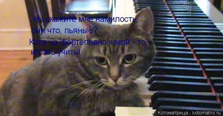 Котоматрица: Ну скажите мне намилость, они что, пьяные? Кота на фортепиано какой - то  играть учить!