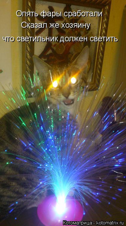 Котоматрица: Опять фары сработали  Сказал же хозяину   что светильник должен светить