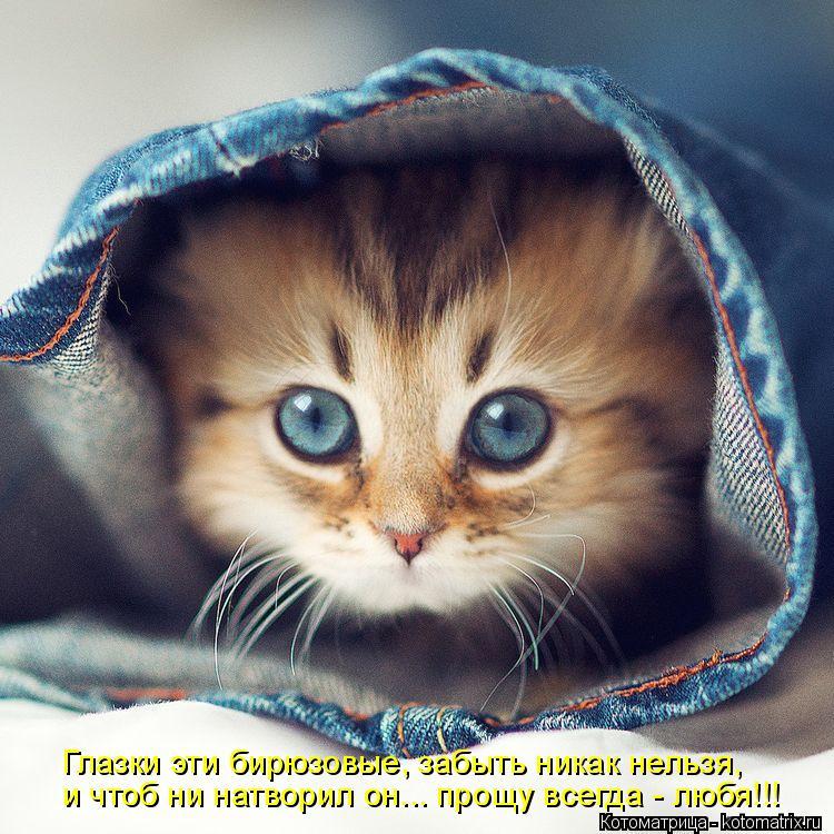 Котоматрица: Глазки эти бирюзовые, забыть никак нельзя,  и чтоб ни натворил он... прощу всегда - любя!!!