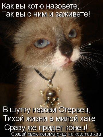 Котоматрица: Как вы котю назовете, Так вы с ним и заживете! В шутку назови Стервец, Тихой жизни в милой хате Сразу же придет конец!