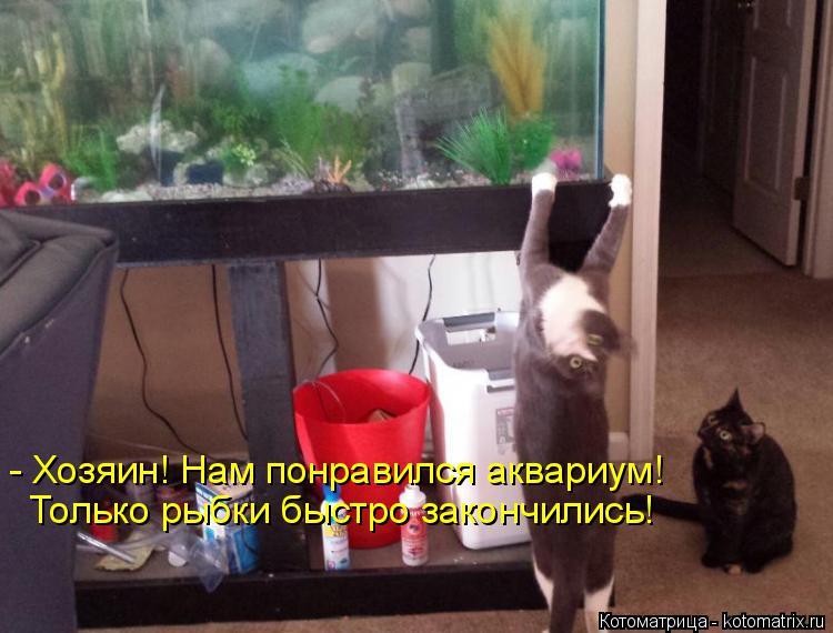 Котоматрица: - Хозяин! Нам понравился аквариум! Только рыбки быстро закончились!