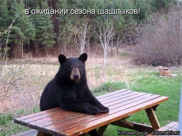 Котоматрица: в ожидании сезона шашлыков!