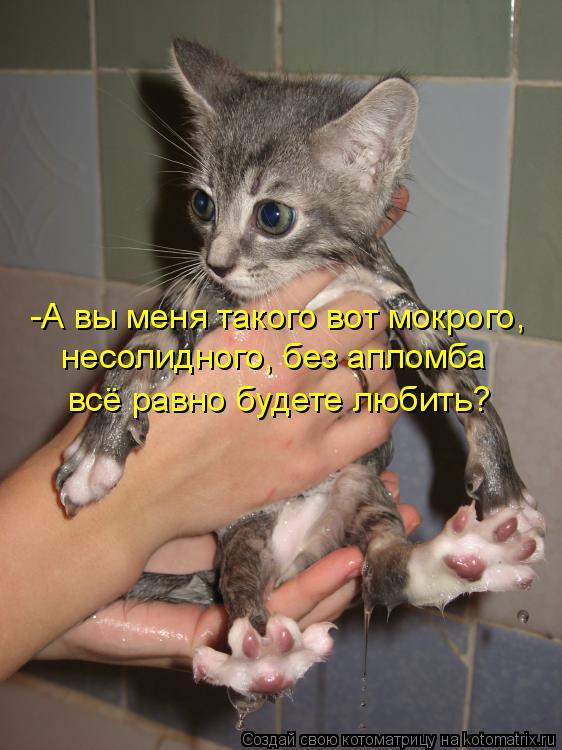 Котоматрица: -А вы меня такого вот мокрого, несолидного, без апломба всё равно будете любить?