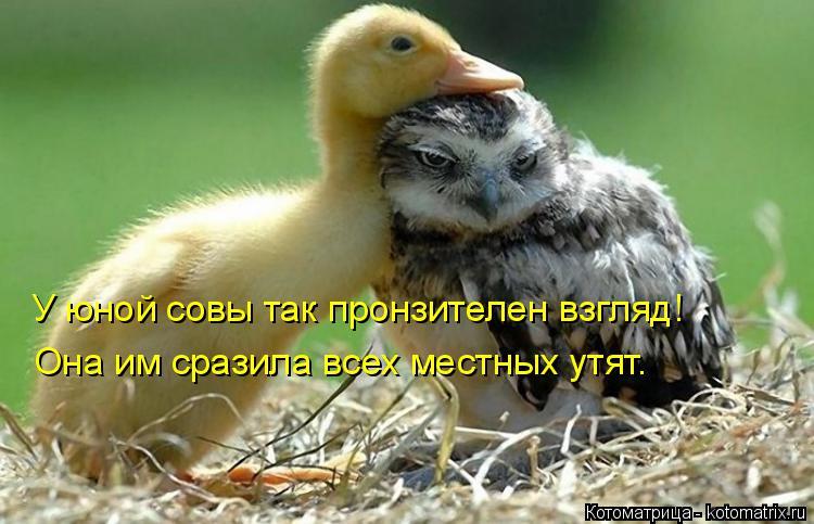 Котоматрица: У юной совы так пронзителен взгляд! Она им сразила всех местных утят.