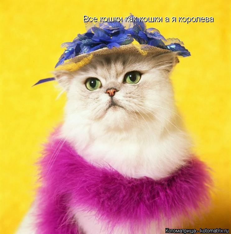 Котоматрица: Все кошки как кошки а я королева