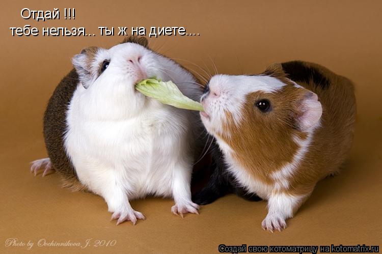 Котоматрица: Отдай !!! тебе нельзя... ты ж на диете....