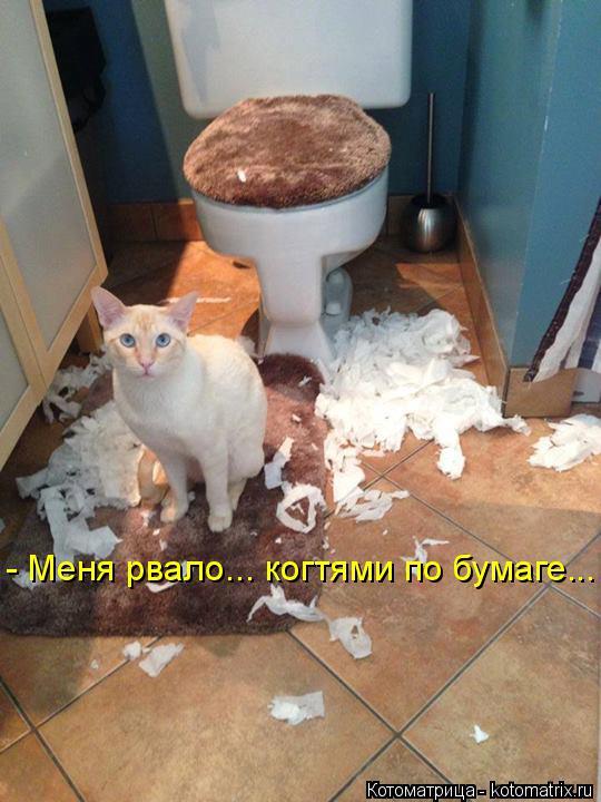 Котоматрица: - Меня рвало... когтями по бумаге...