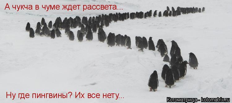 Котоматрица: А чукча в чуме ждет рассвета... Ну где пингвины? Их все нету...