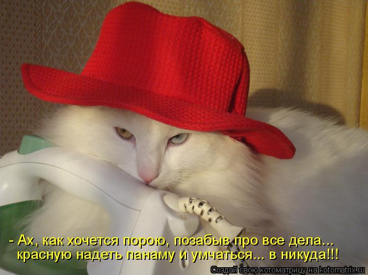 Котоматрица: - Ах, как хочется порою, позабыв про все дела... красную надеть панаму и умчаться... в никуда!!!