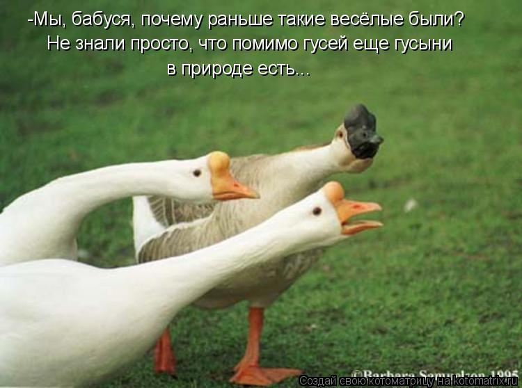 Котоматрица: -Мы, бабуся, почему раньше такие весёлые были? Не знали просто, что помимо гусей еще гусыни  в природе есть...